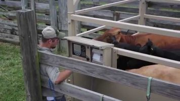 Livestock Scales Sales Video